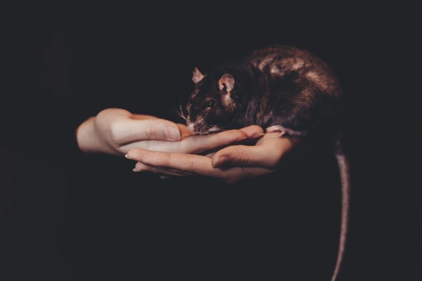 Universe 25 / Mouse Utopia
